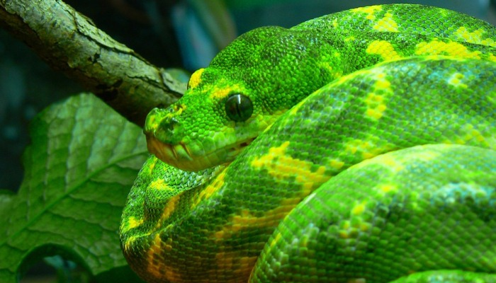Soñar Con Serpientes Enrolladas