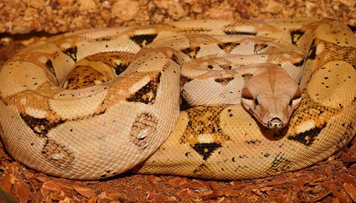 Soñar Con Serpientes enroscadas