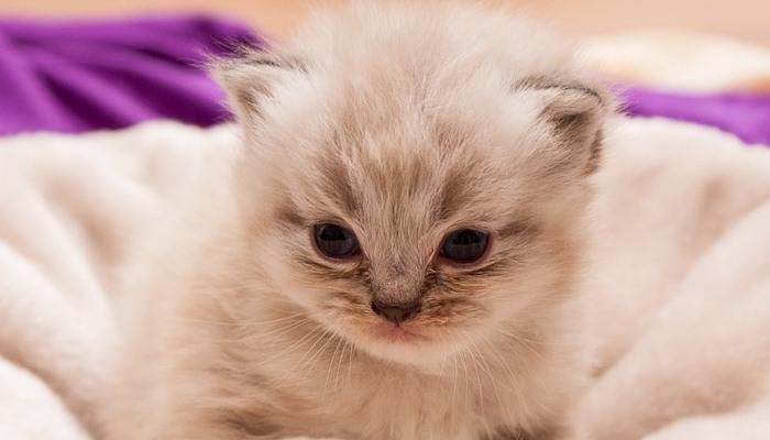 he soñado con gatos