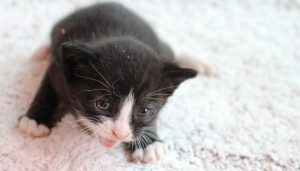 Soñar Son Con Gatos Pequeños