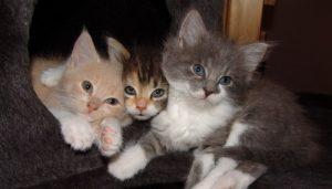 Soñar Con Muchos Gatos