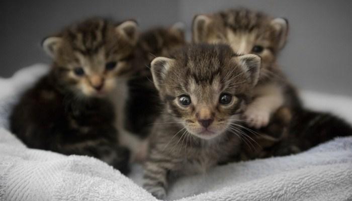 Sueños Con Varios Gatos