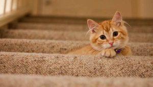 Qué Significa Soñar Con Gatos Amarillos