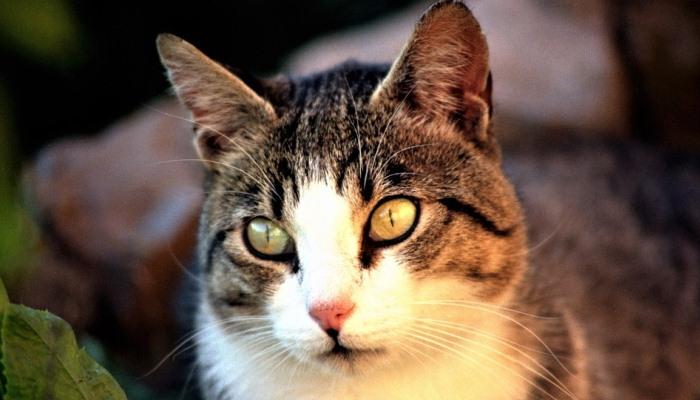 soñar con gatos en peligro