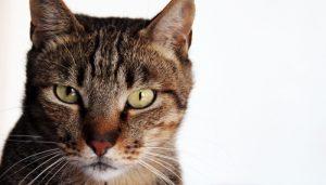 Que Significa Soñar Con Caca de Gatos