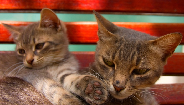 Qué quiere decir la caca de gato o excremento de gato en un sueño