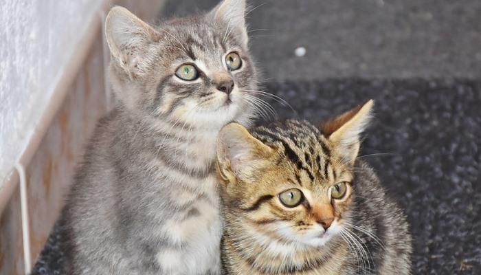 gato callejero en un sueño