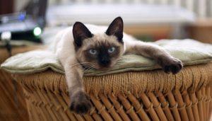 Soñar Con Gatos Peleando