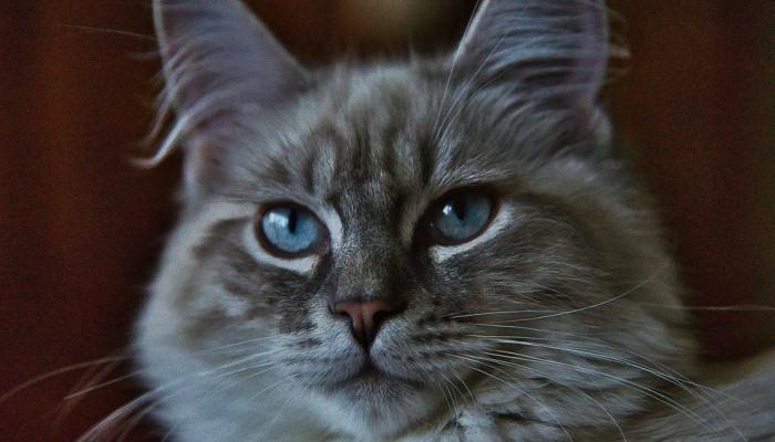 Soñar Con Gatos peleadores