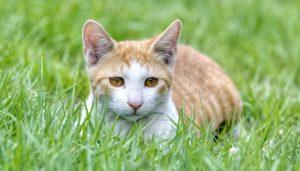 Soñar Con Un Gato Desaparecido