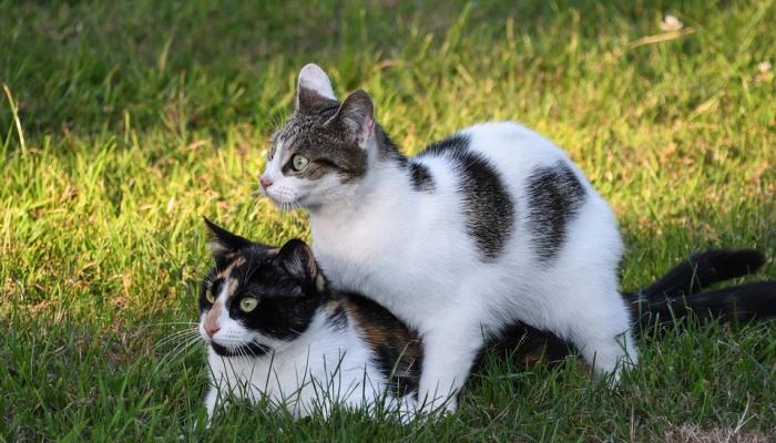 tener un sueño donde llevas a un gato al veterinario