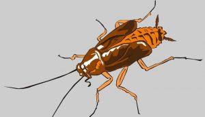 El Significado De Soñar Con Cucarachas
