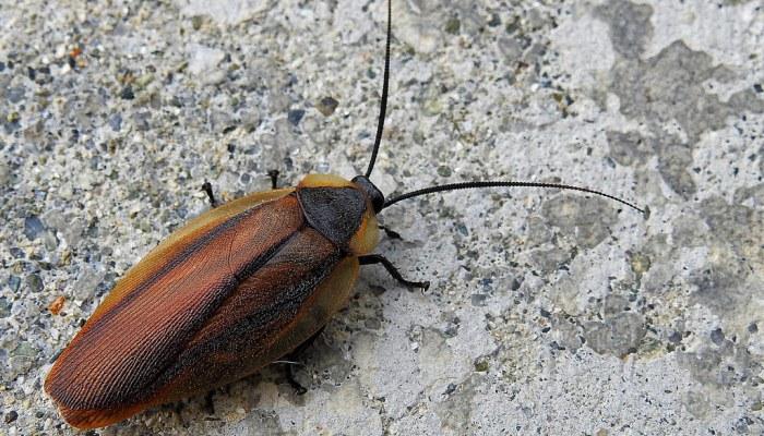 El Significado Espiritual De Las Cucarachas