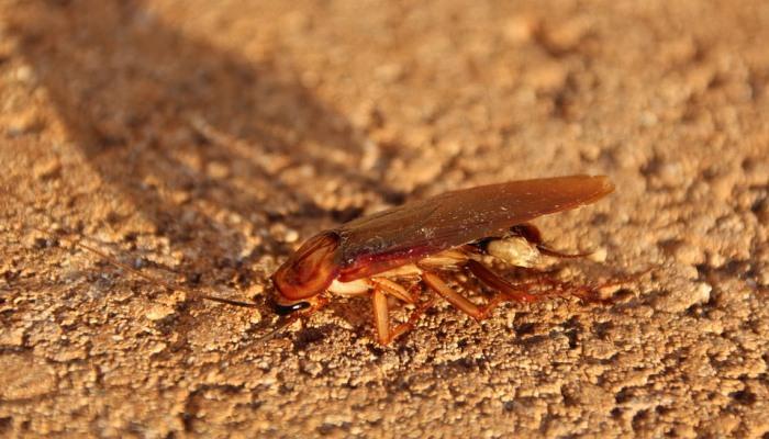 Soñar Con Cucarachas En Una Casa