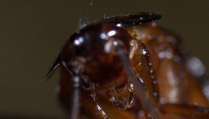 Sueños Recurrentes Con Cucarachas