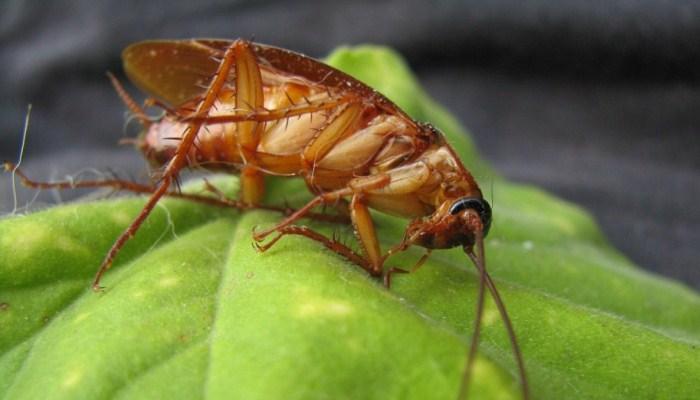Soñar Con Matar A Una Cucaracha
