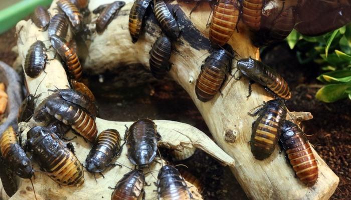 Soñar Con Muchas Cucarachas: Significado De Los Sueños