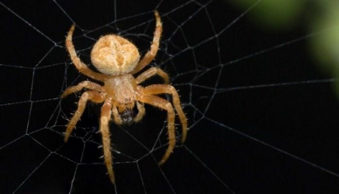 Espiritualidad En Las Arañas